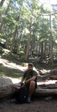 giant trees!