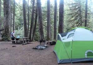 MOST BEAUTIFUL CAMPGROUND award so far: Ohanapecosh campground on the southeast side of Mt. Rainier. i love the GIANT TREES!