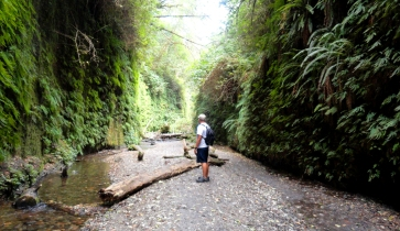 Fern Canyon at Redwood NP