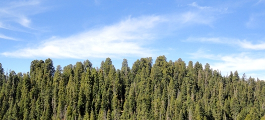 Sequoia NP — my favorite!